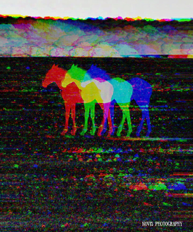 pony-trace